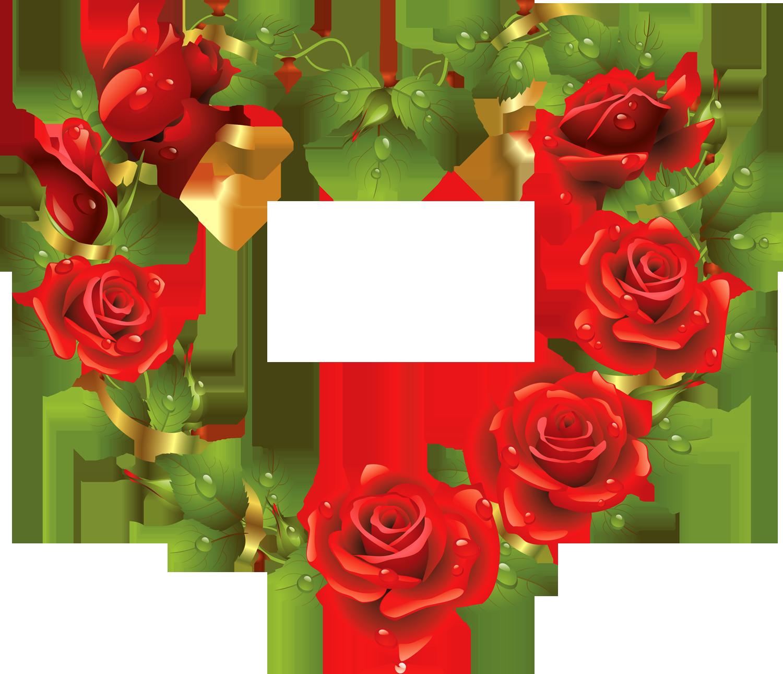 цветы Png - Bing Images