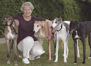 Scottish Woman Adopts 14th Rescue Dog Dogs Grey Hound Dog Rescue Dogs