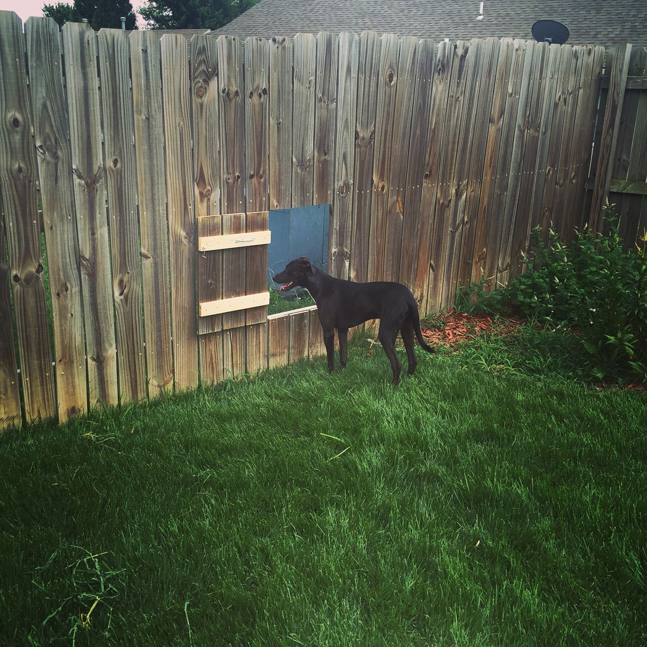 Doggy Door In Fence To Neighbors So Dogs Can Play Dog Fence