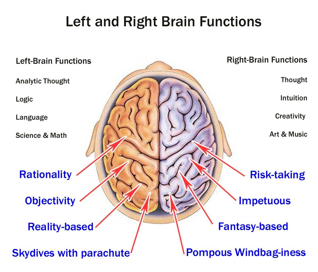 the left and right brain the