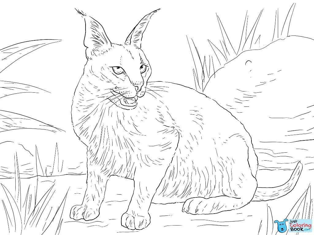 Caracal Desert Wild Cat Coloring Page Cat Coloring Page Cat