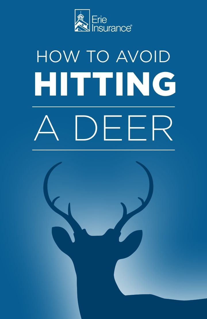 How To Avoid Hitting A Deer Erie Insurance Deer Good To Know