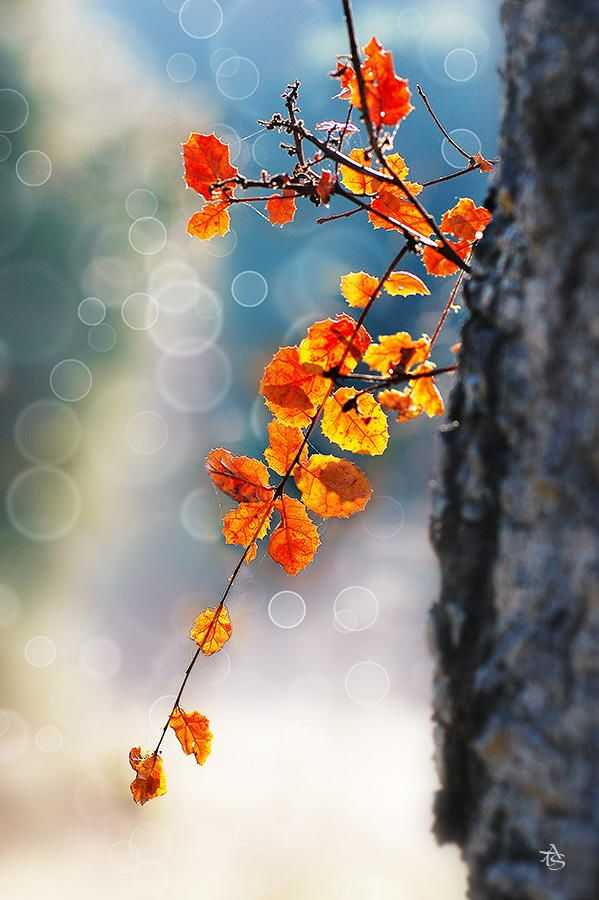 Autumn by ATS TRAN on 500px