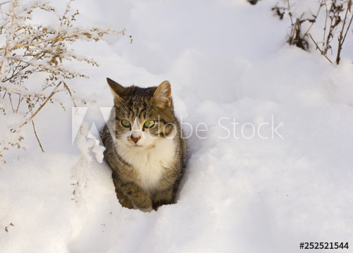 Funny Gray Tabby Cat Sitting In The Deep Snow Buy This Stock Photo And Explore Similar Images At Adobe Stock Ad Serye Polosatye Koshki Polosatye Koshki Koshki