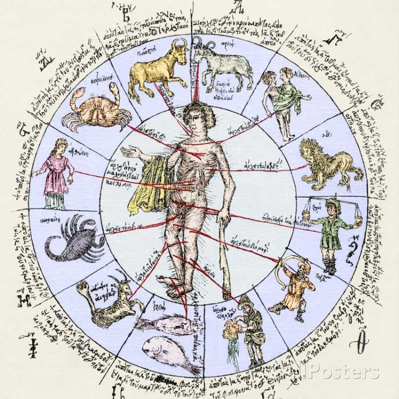 Medical zodiac 15th century diagram 15th century diagram and medical zodiac 15th century diagram photographic print by sheila terry at allposters ccuart Images