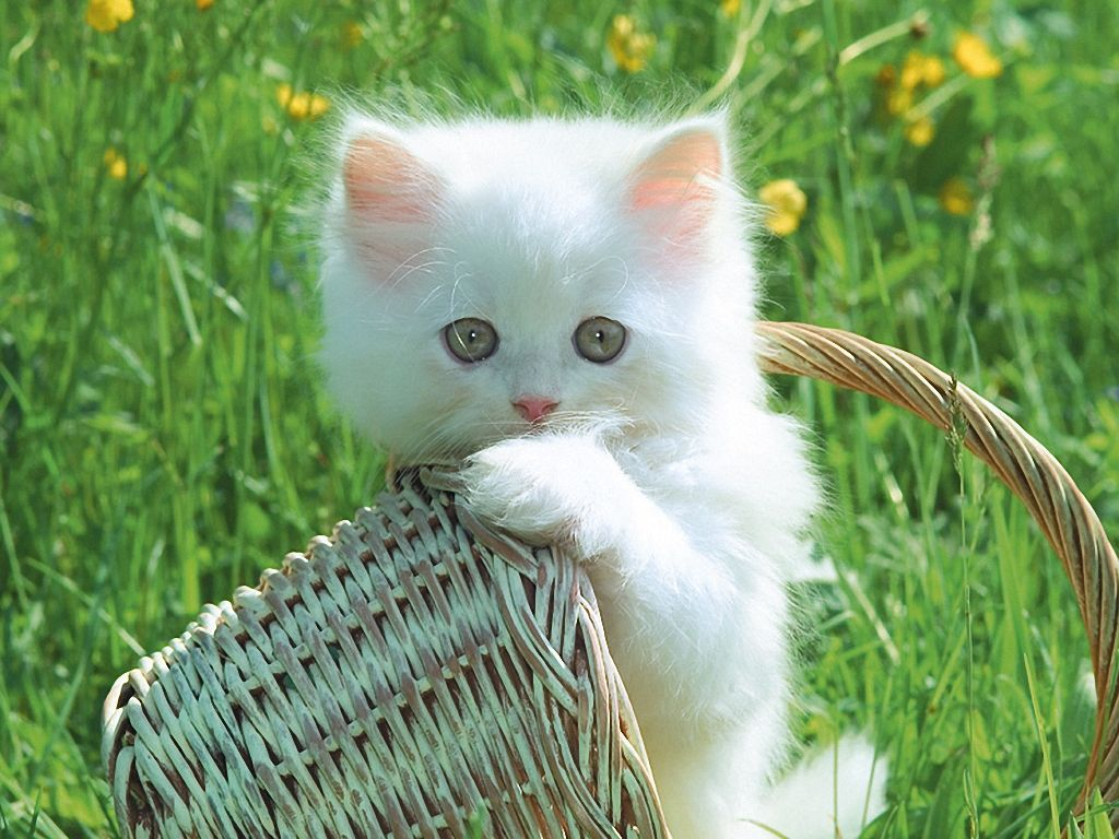 My little meow, meow! ️ (With images) Cute cats, Cats