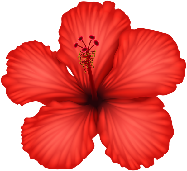 Red Hibiscus Png Clip Art Free Watercolor Flowers Hibiscus Image Digital Flowers