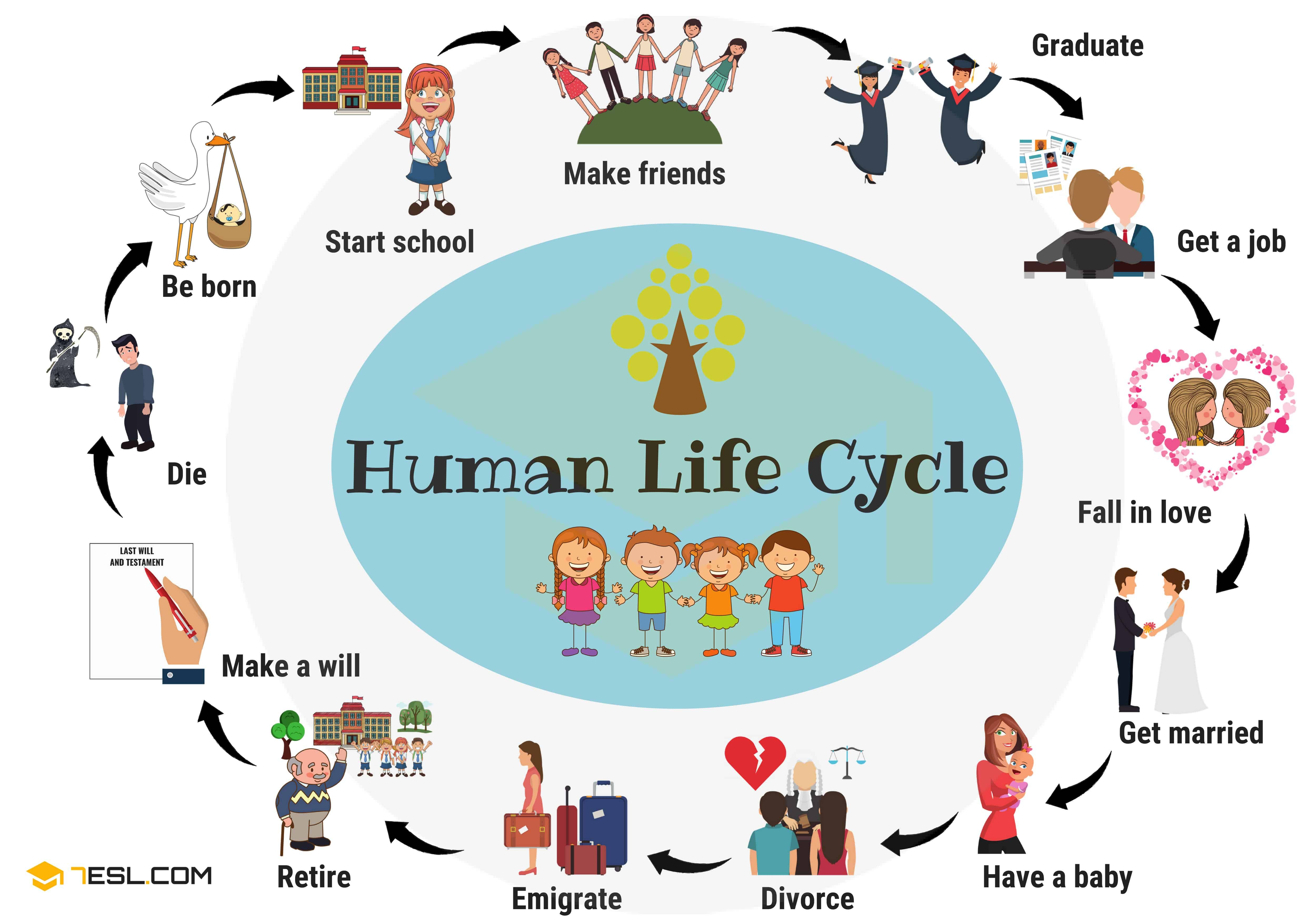 Family Members Names Of Members Of The Family In English 7esl Human Life Cycle Life Cycles Life Cycle Preschool