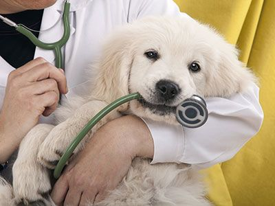 Caring For A Newborn Puppy Dog Insurance Veterinary Care