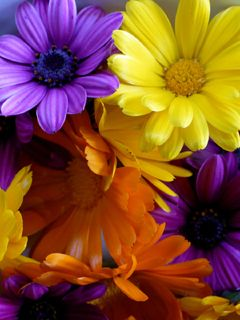 Download Cute Colors Flowers Mobiles Wallpaper 39464 From Mobile