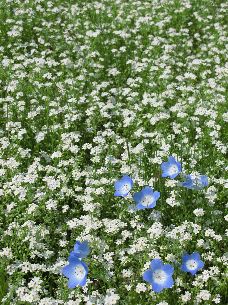 Flowers 花 はな Decor Outdoor Decor Outdoor