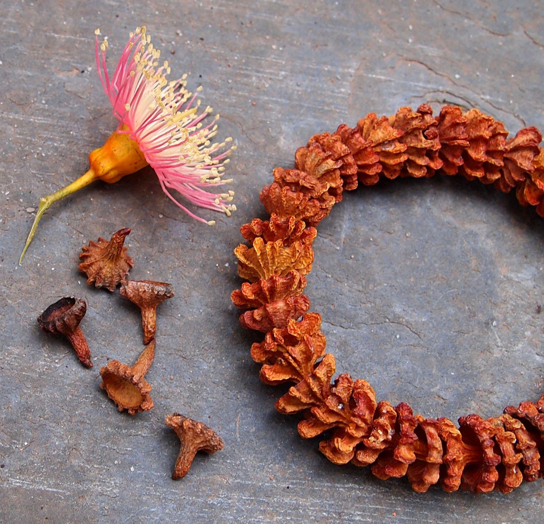 Coral Gum Cap Bracelet Nature Crafts Crafts Seed Pod Jewelry
