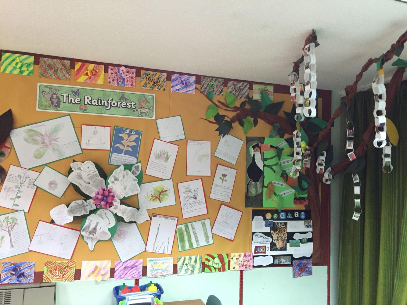 Rainforest display ks2 Gallery wall, Rainforest, Decor