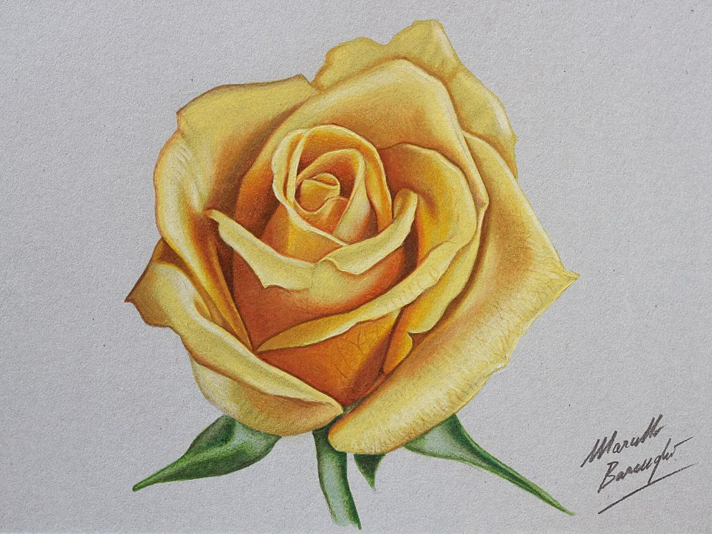 How To Draw A Rose  Mode Blog · Rose Drawingscolored Pencil