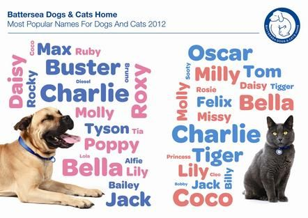 Battersea Reveals Top Animal Names Battersea Dogs Cats Home Puppy Names Battersea Dogs Cat Facts