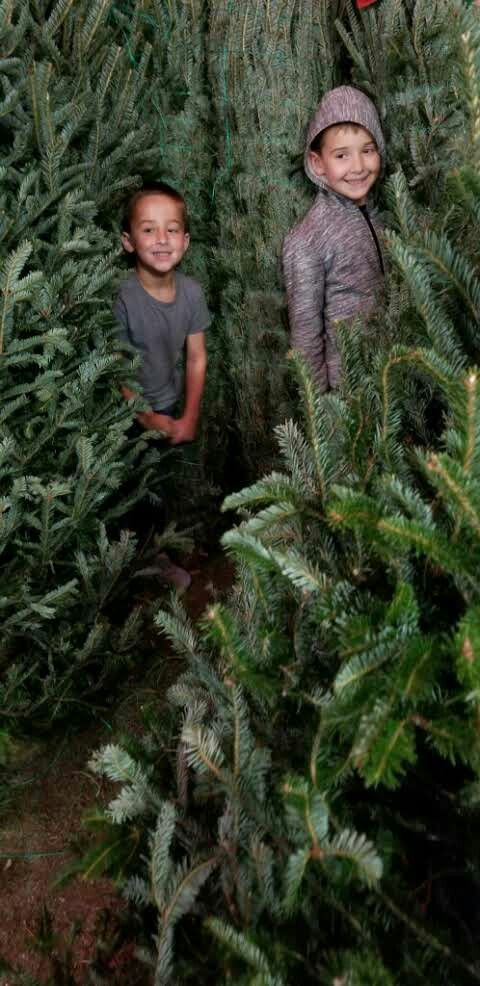 Joey And Brody At Home Depot Christmas Tree Lot Nov 29 2019 Christmas Tree Lots Ties That Bind Christmas Tree