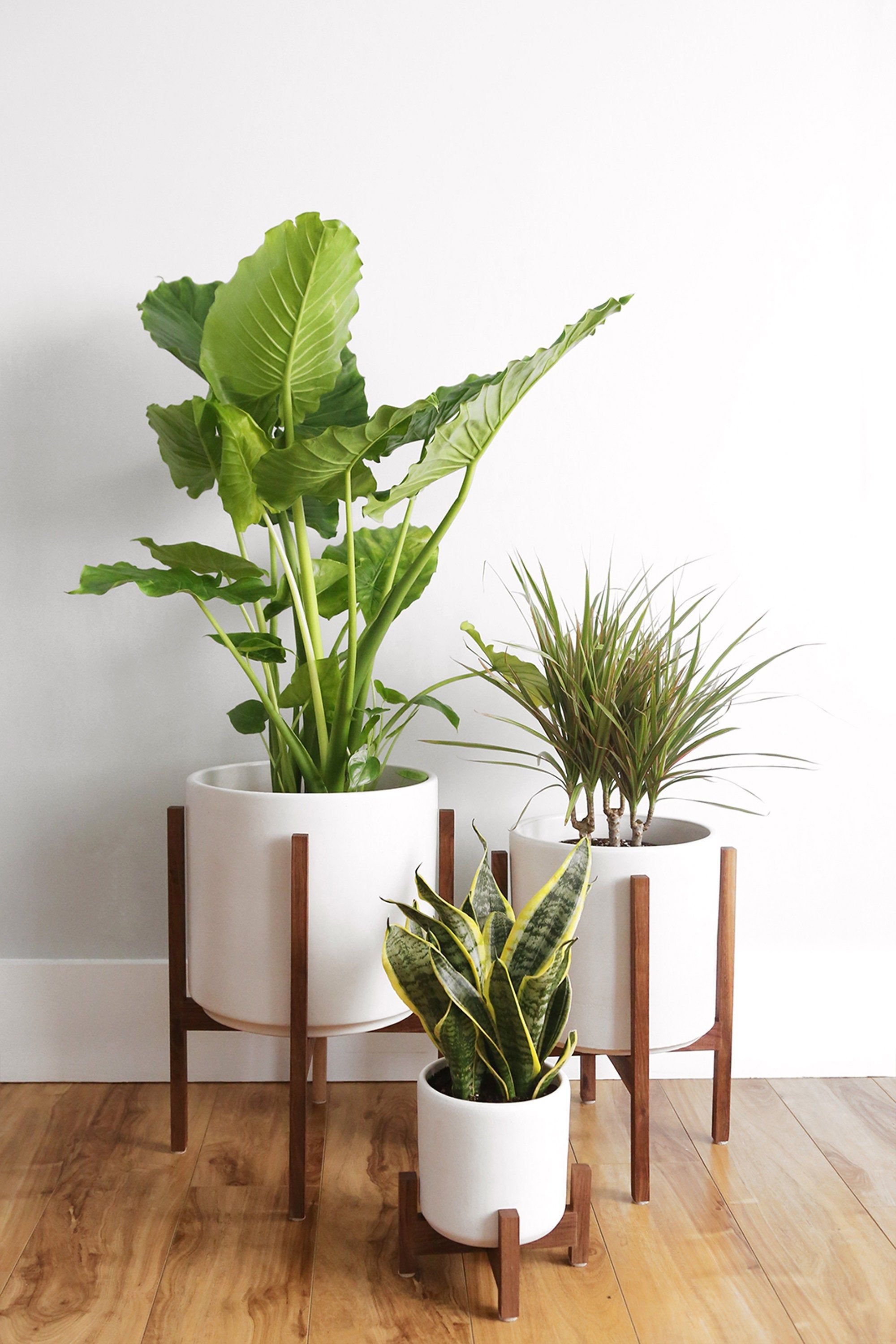 Mid Century Modern Planter, Plant Stand, Ceramic Plant Pot and Solid Wood Stand - 10 Indoor Planter