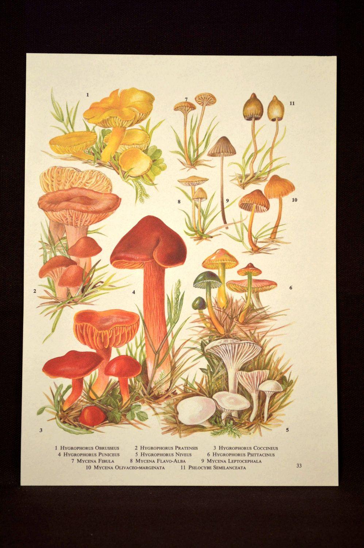 Mushroom Print Mushroom Wall Art Plant Print Botanical   Nature ...