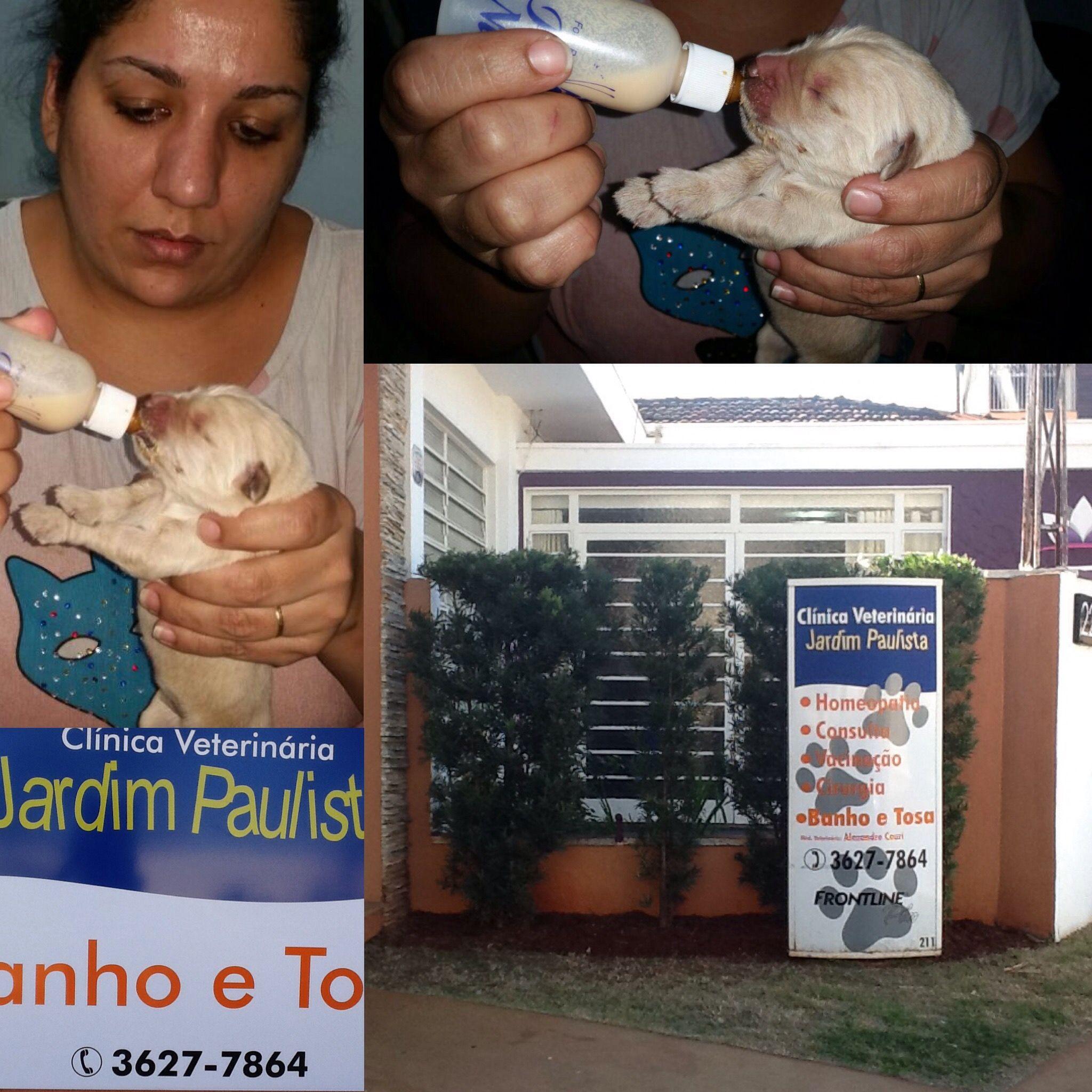 CLÍNICA VETERINÁRIA JARDIM PAULISTA, localizada na cidade de Ribeirão Preto, SP na rua Arnaldo Victaliano, 211 #veterinaria #pets #petshop #clinicas #medicina #medvep2015 #ribs #ribeiraopreto #saopaulo #saosimao #franca #barretos #batatais #rifaina #loveit #cravinhos #serraazul #sertaozinho #brodowski #pirassununga #araras #araraquara #dogs #doglovers #dogsofinstagram