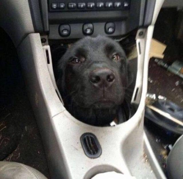 Pin De Suzzanne En Dogs Humor Divertido Sobre Animales Imagenes Divertidas De Animales Animales Bonitos