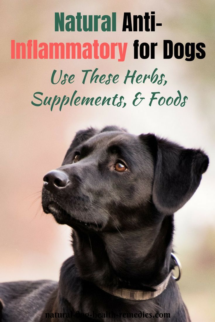 Anti inflammatory steroids for dogs oral steroids types