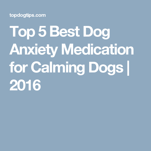Top 5 Best Dog Anxiety Medication for Calming Dogs | 2016