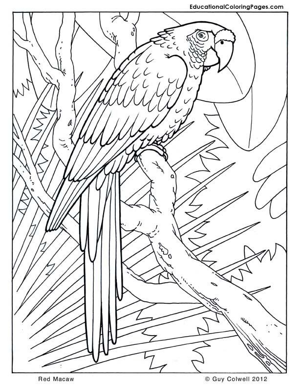 Macaw Coloring Pages Birds Coloring Rainforest Animals Cool
