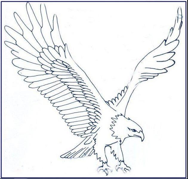 30 Gambar Kartun Burung Garuda Terbang Kumpulan Sketsa Gambar Burung Elang Hantu Merpati Merak Bird Gambar Burung Banga Gambar Burung Cara Menggambar Burung