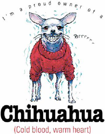 Chihuahua!!!