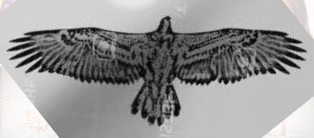 Eagle outline for tattoo
