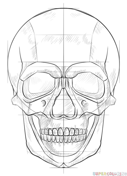 How to draw a human skull step by step. Drawing tutorials