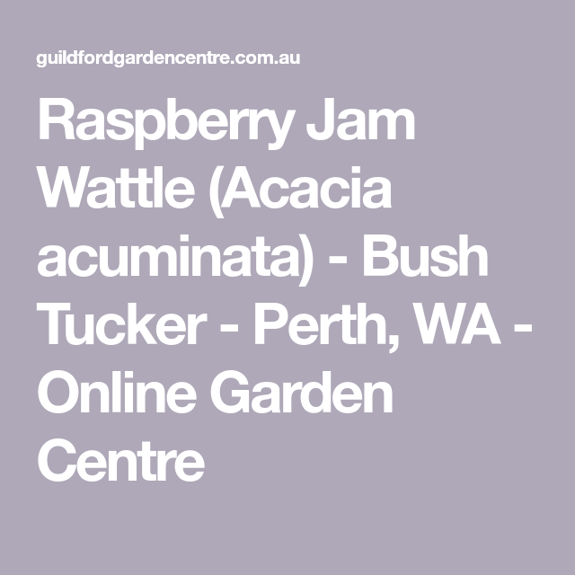 Raspberry Jam Wattle Acacia Acuminata Bush Tucker Growing