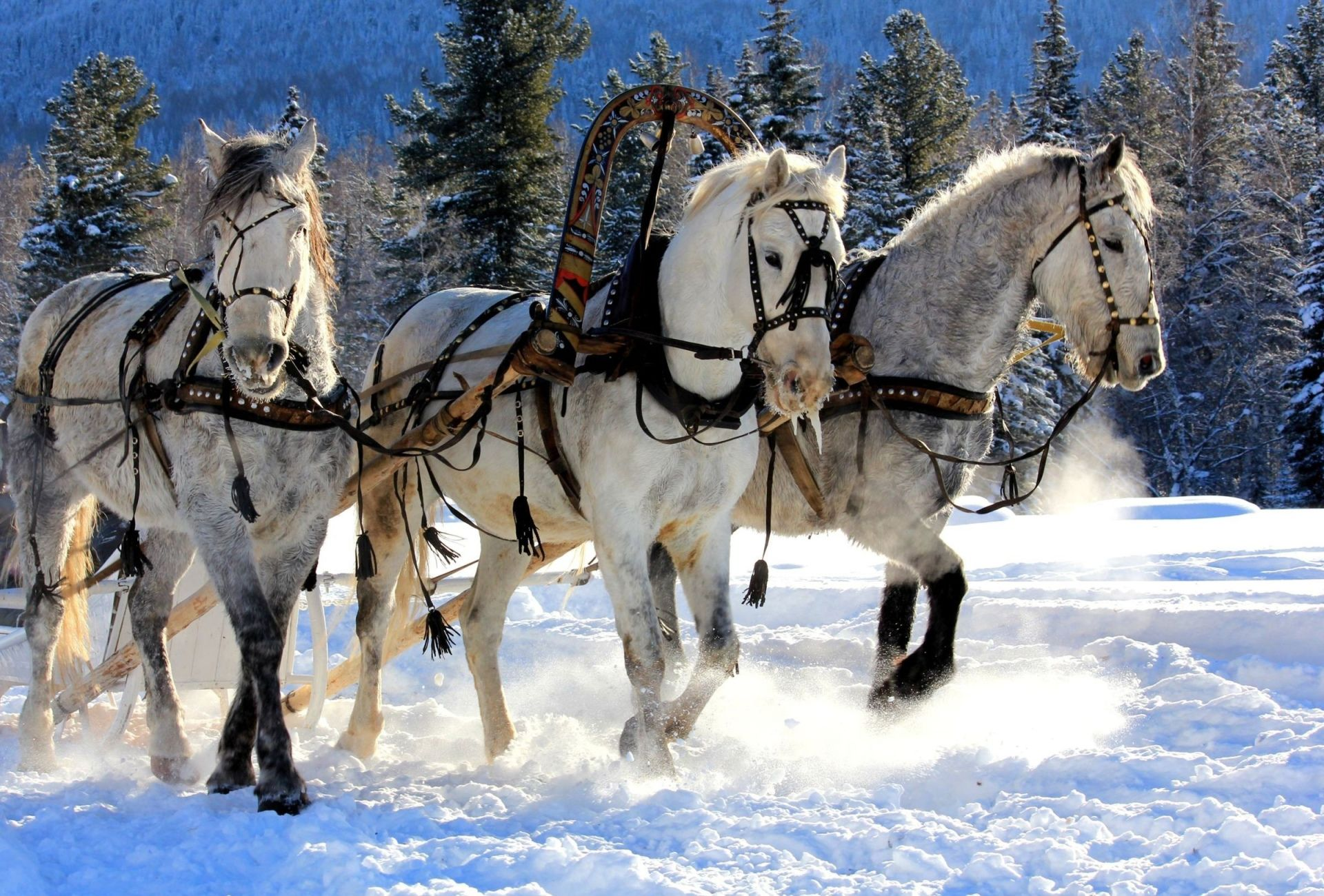 Top Wallpaper Horse Winter - 7c38f8458583d303d6606cea741ca942  Graphic_394274.jpg