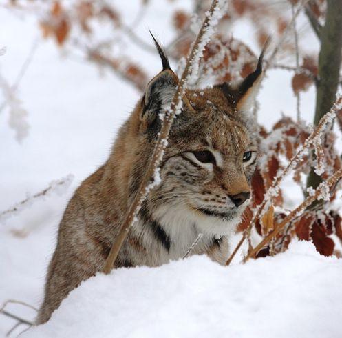Artenvielfalt Bewahren Tiere Und Pflanzen Schutzen Artenschutz Natur