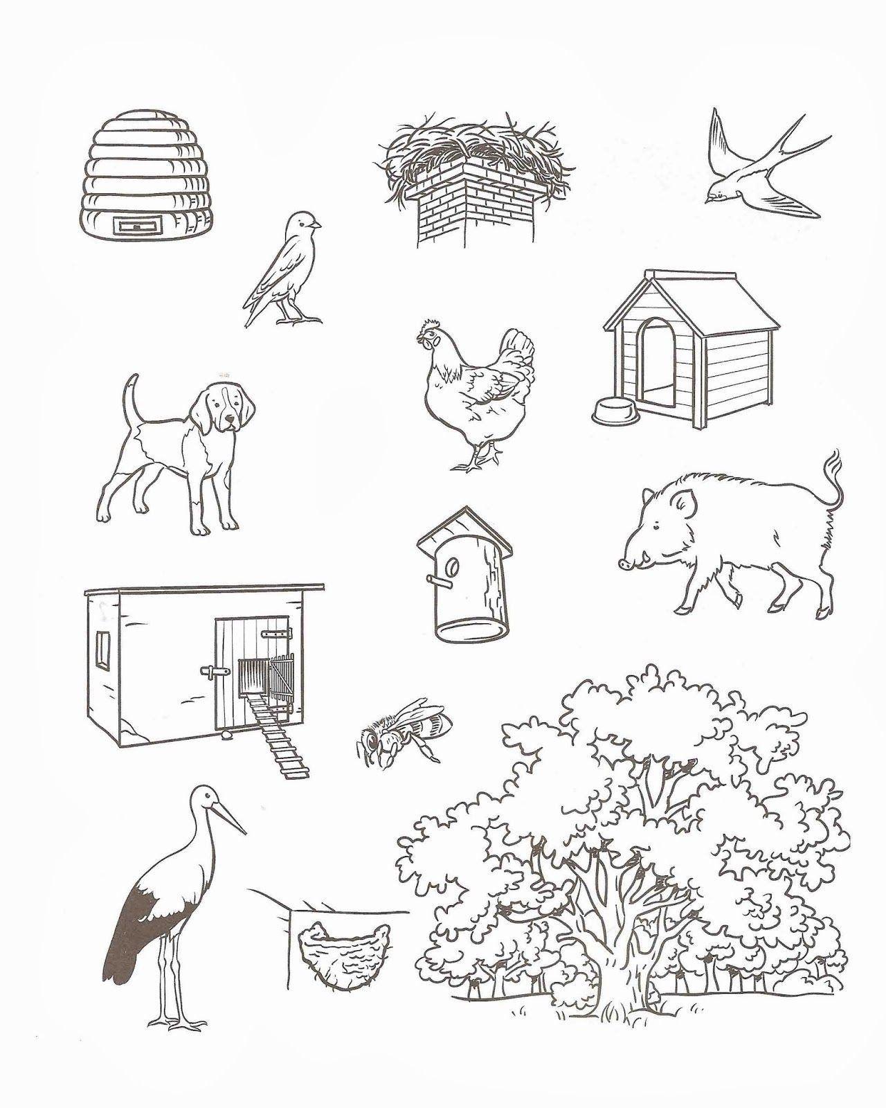 Animal Habitat Worksheet For Kindergarten Kindergarten
