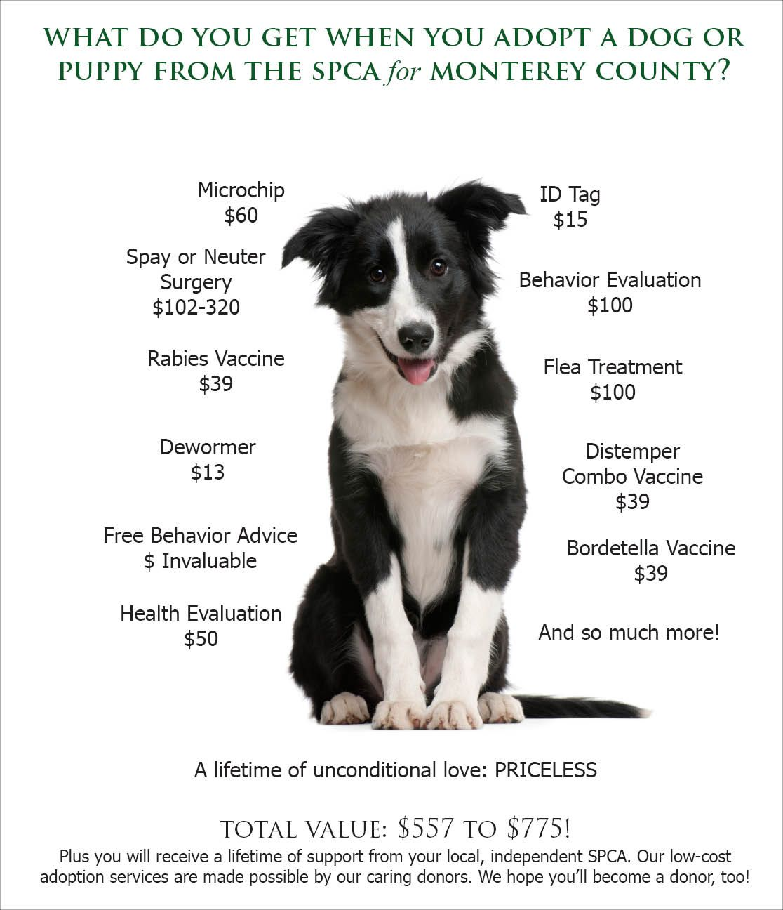 Adopting Dogs Google Search Spca Puppies Adoption