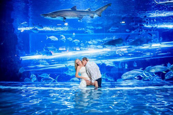 Playful Post Wedding Swim With The Sharks Golden Nugget Weddings Las Vegas Weddings And Wedding