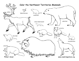 Image result for alpine tundra coloring page biomes for Tundra animals coloring pages
