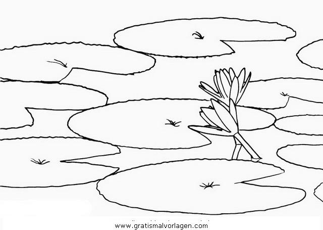 Seerosenblatt Malvorlage Seerosen Seerose 2 Gratis Malvorlage In Blumen Natur Ausmalen