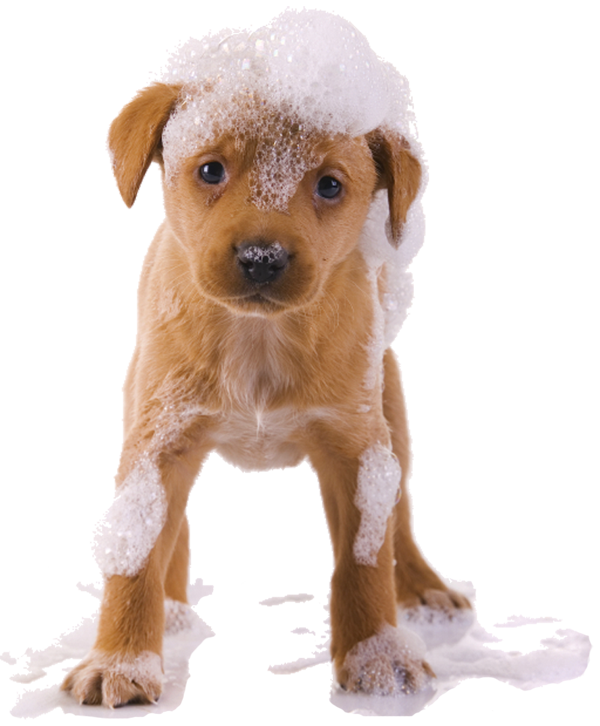 Our All Naturalpetshampoo Provides You With The Happy Feeling Of