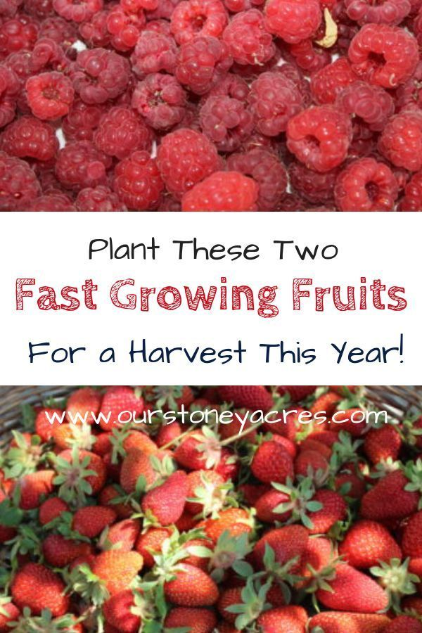 Fast growing fruits - Get a harvest in the first year - Our Stoney Acres