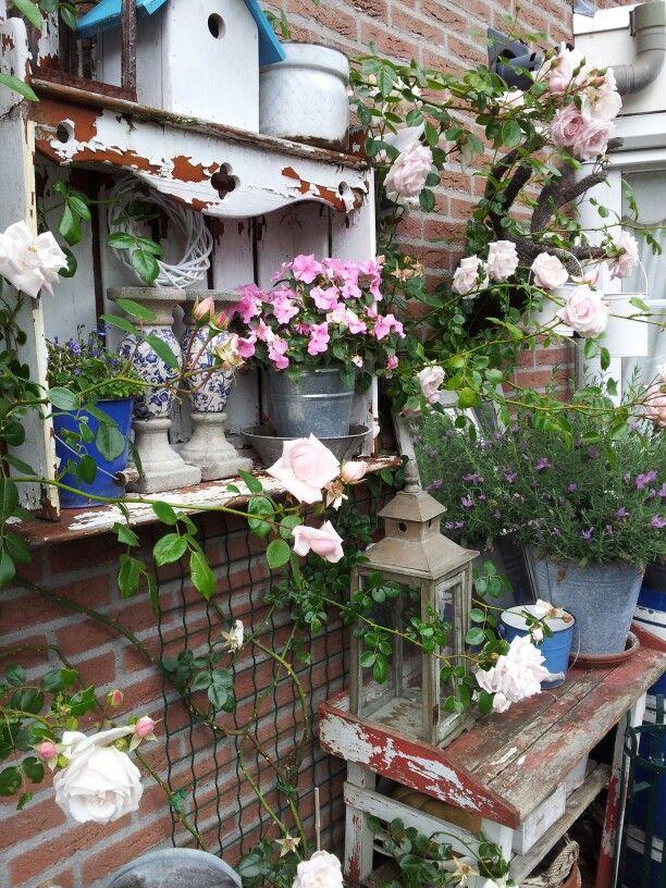 New Dawn Roos Garten French Cottage Garden Shabby Chic Garten
