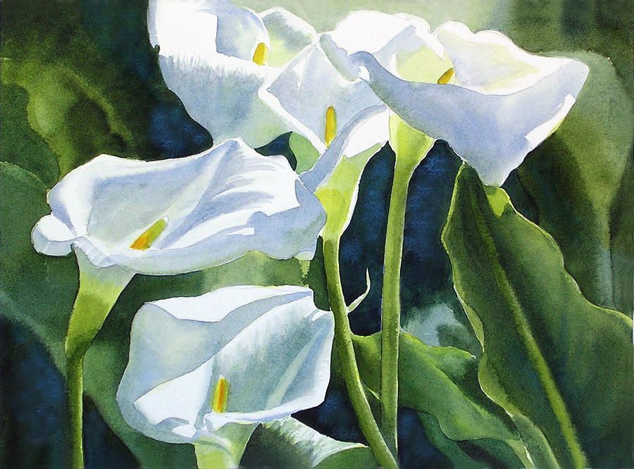 White Calla Lilies By Sharon Freeman Lily Painting Calla Lily Flower Painting