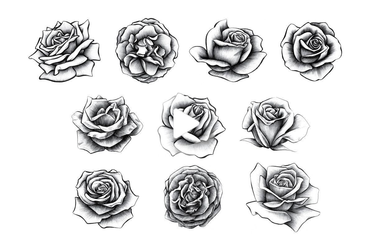 Hand Drawn Rose Collection Graphics Youworkforthem In 2020 Realistic Rose Tattoo Roses Drawing How To Draw Hands