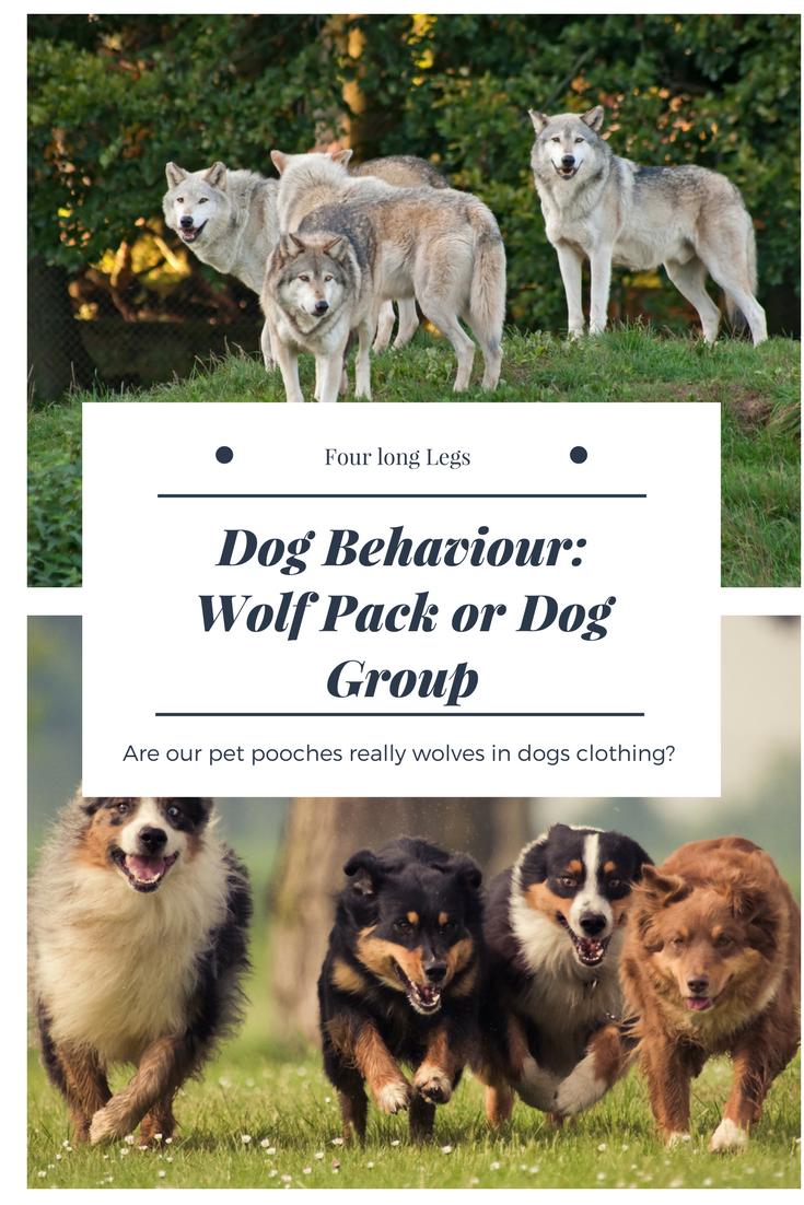 The Origin Of Domestic Dogs Four Long Legs Dog Behavior Domestic Dog Dogs