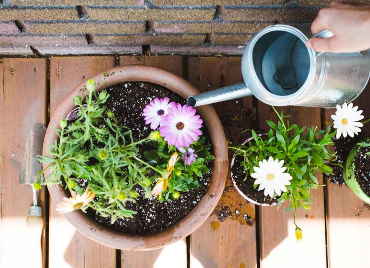 "Goodbye Grass: 13 Inspiring Ideas for a ""No Mow"" Backyard ... on Cheap No Grass Backyard Ideas id=67447"