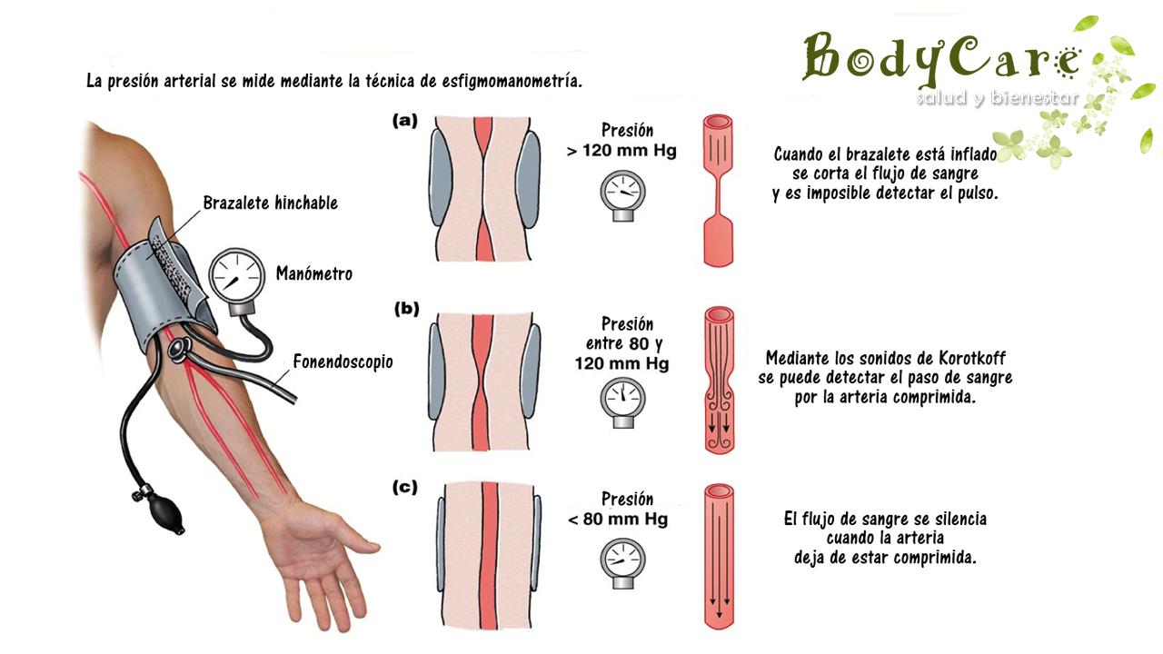 parametros de presion arterial normal en adultos - Buscar..