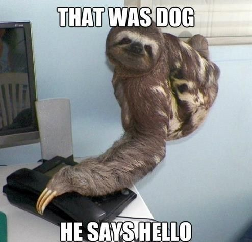 sloths don t always take phone messages well but when they do it s