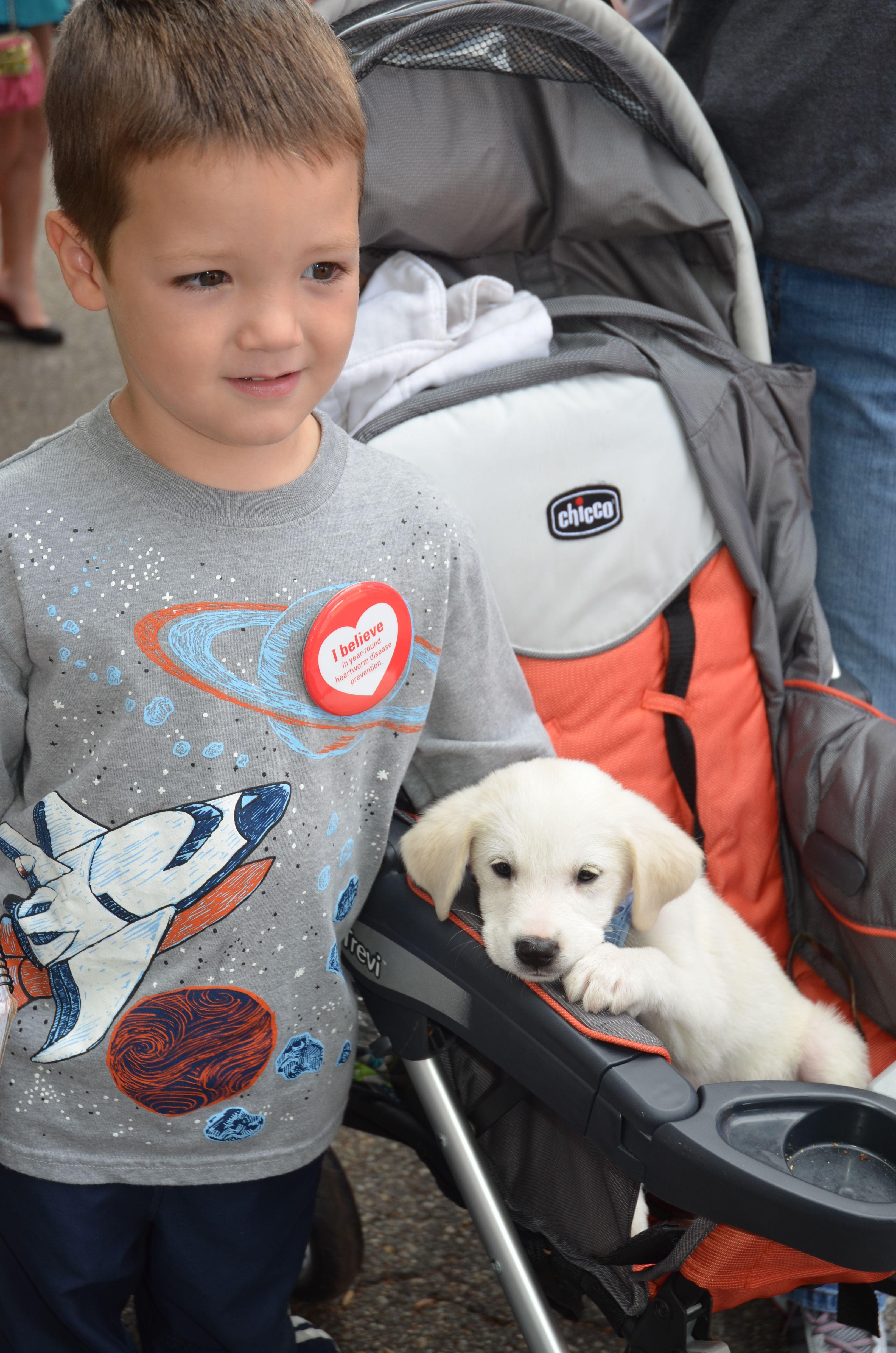 White Lab Puppies For Adoption