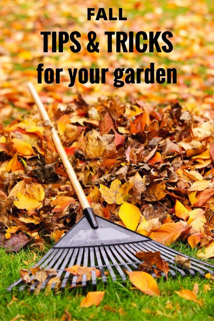 fall tips and tricks for your garden garden tips pinterest
